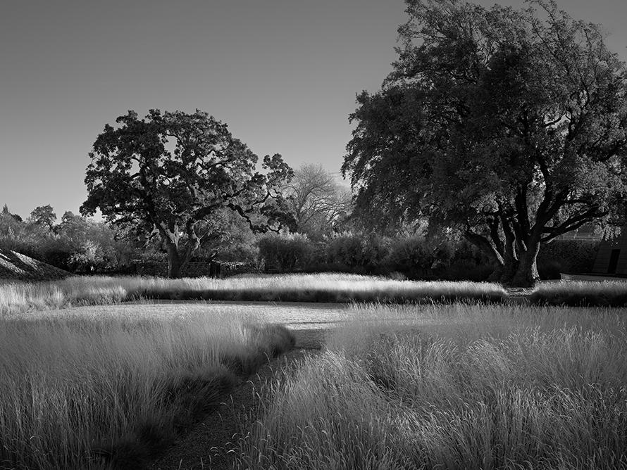 andrea cochran zwart wit foto landschap met grassen